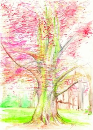cerveny dub